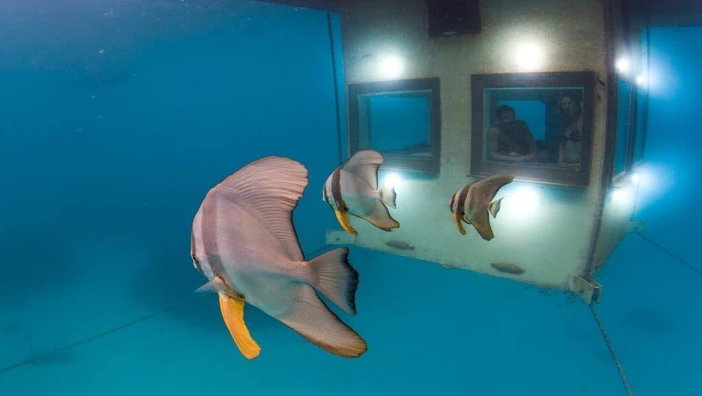 Manta Resort Room Underwater