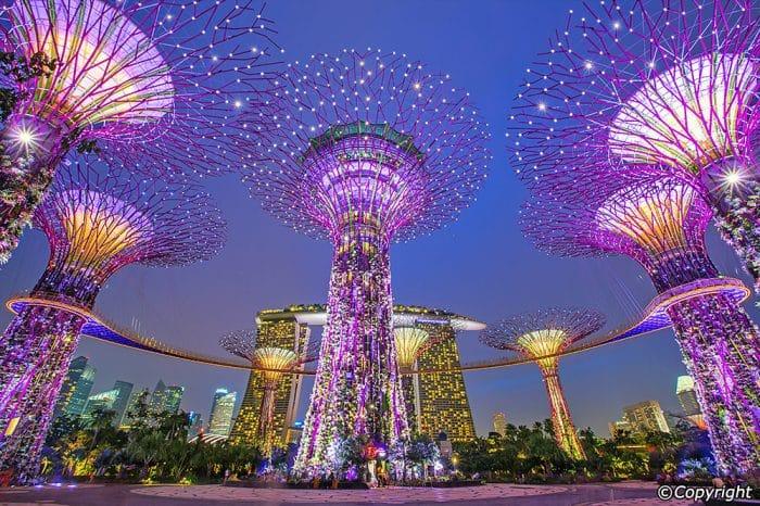 Super Tree Grove in SG