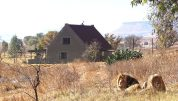 Lion House In South Africa