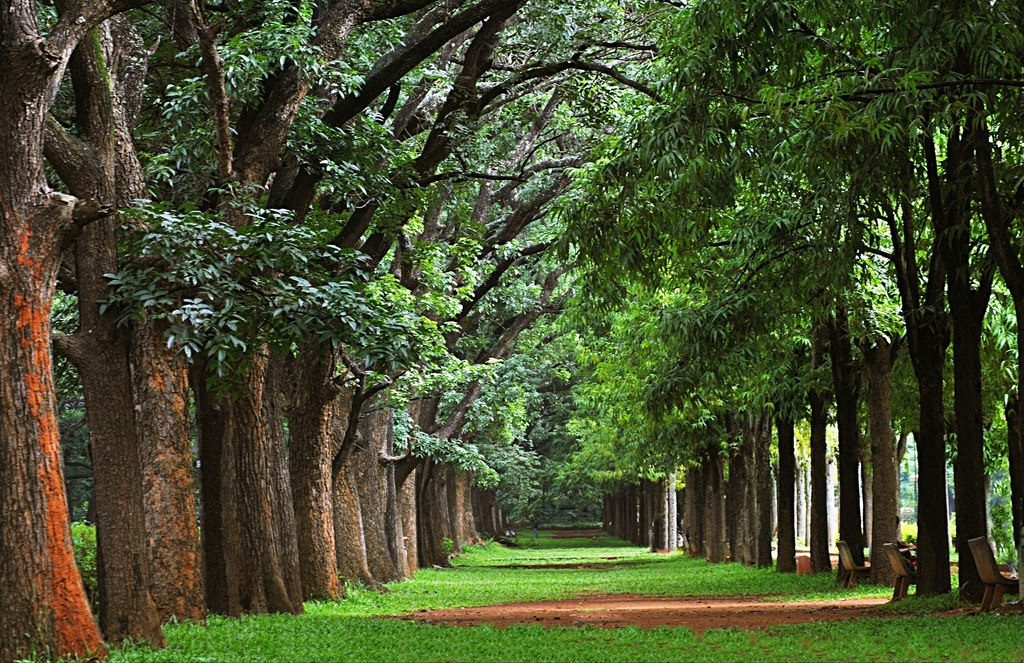 Cubbon Park in Banglore