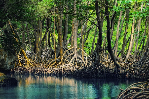 Kayak through the Mangroves of Al Thakira