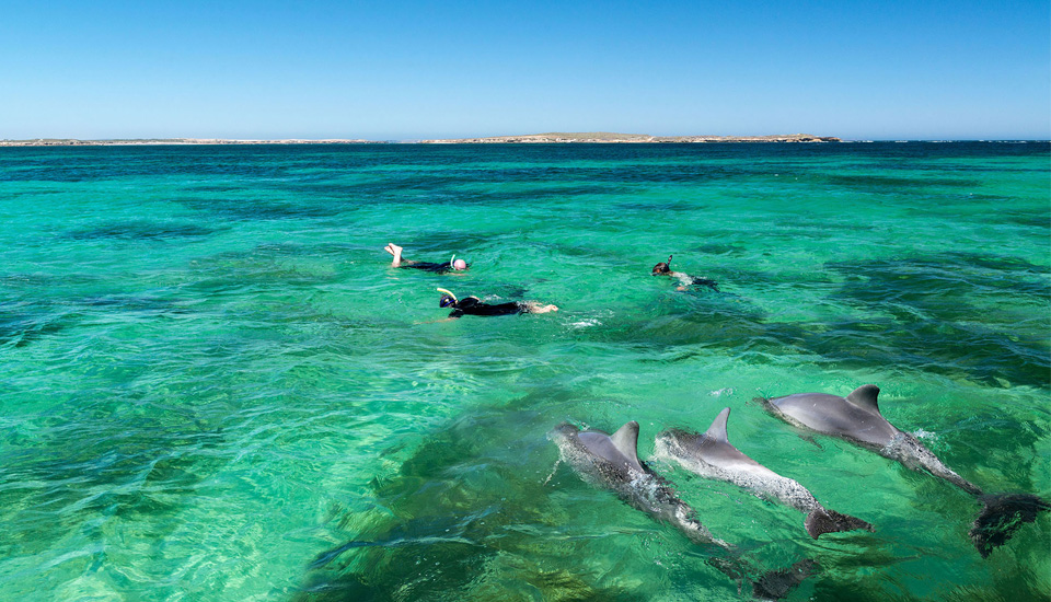 Swim with dolphins off Glenelg Beach in Adelaide