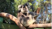Caversham Wildlife Park In Perth
