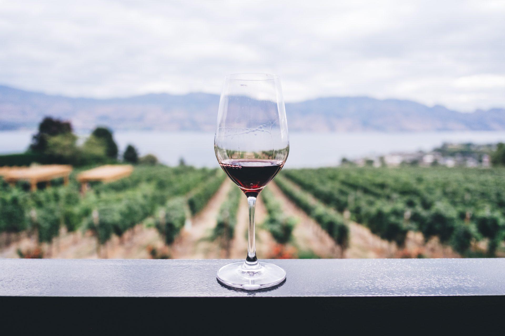 Wine Flies Wine Tours