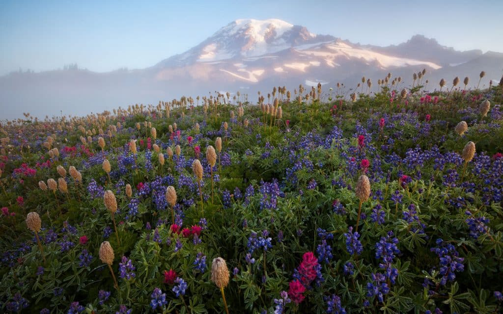 Wildflower Bloom