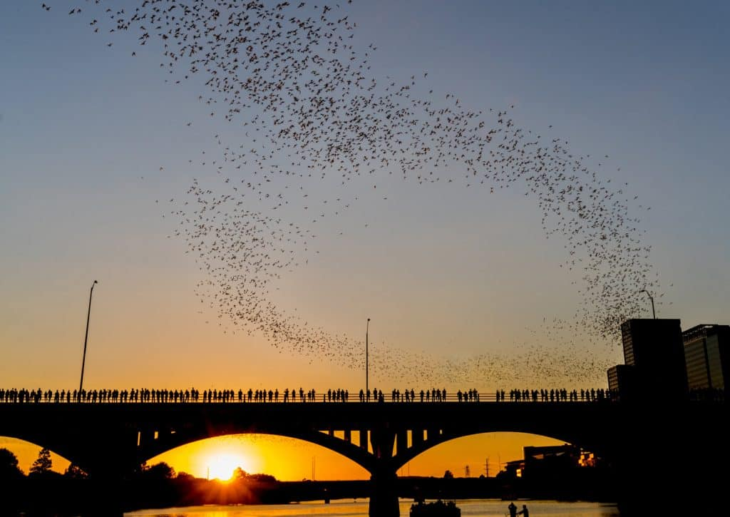 Watch 1.5 million bats fly into the sunset