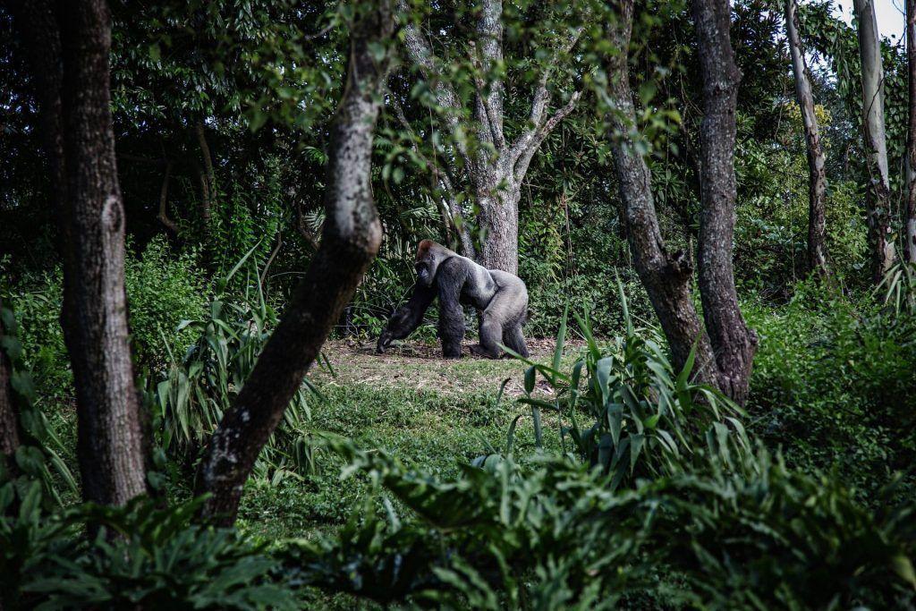 Virunga National Park Bucket List
