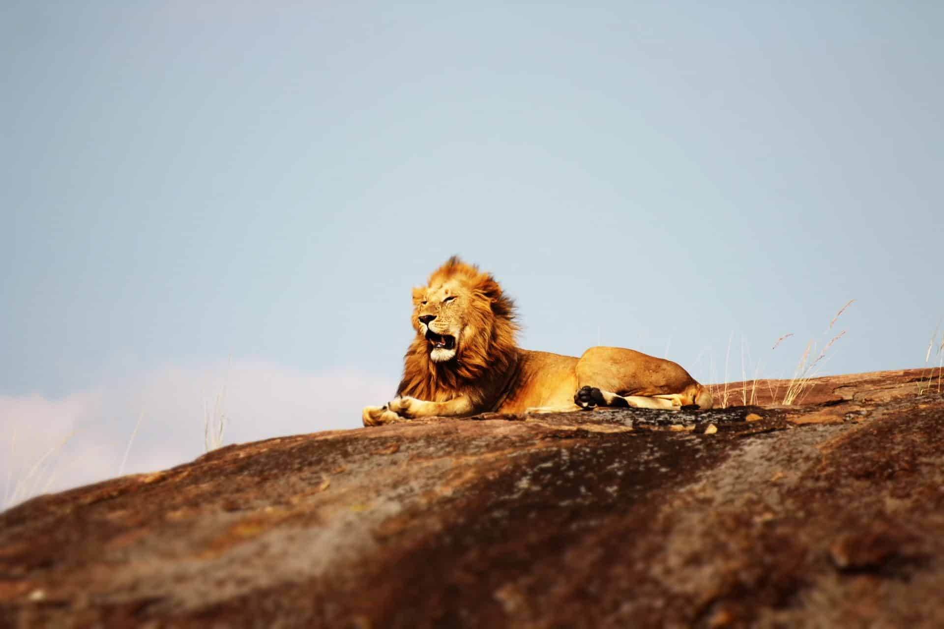 The Pride Lands With Lion King Safaris