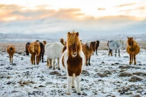 Iceland expats