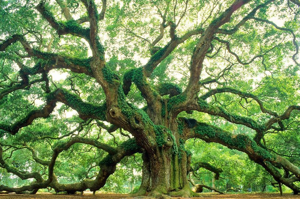 Visit the Angel Oak