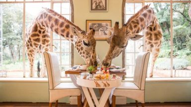 best safari lodges kenya