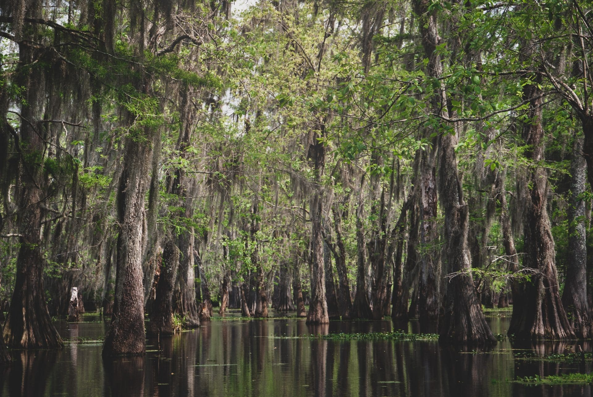 Swamp Tour in New Orleans