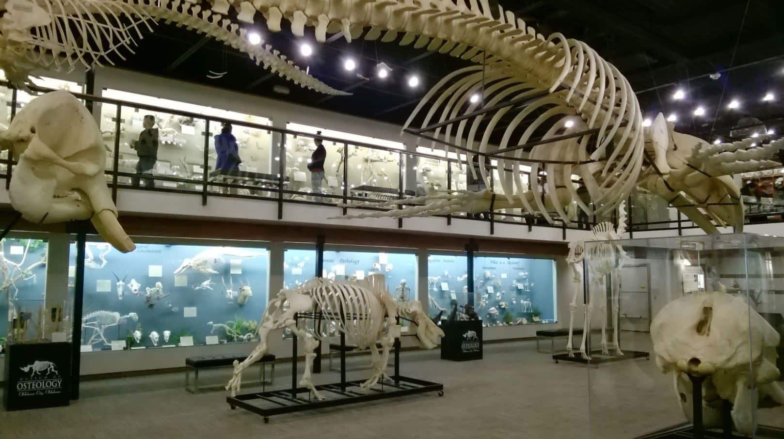 Museum of Osteology in Oklahoma City