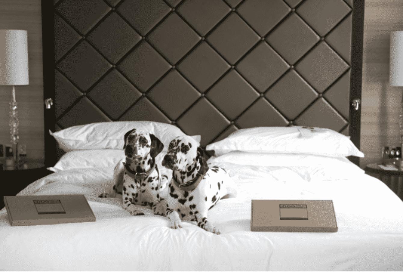 Dog friendly hotels England