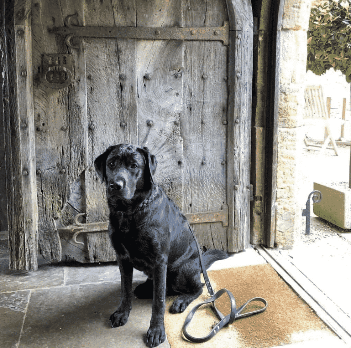 The best Dog friendly hotels England