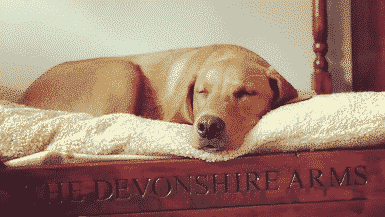 Dog friendly hotels England