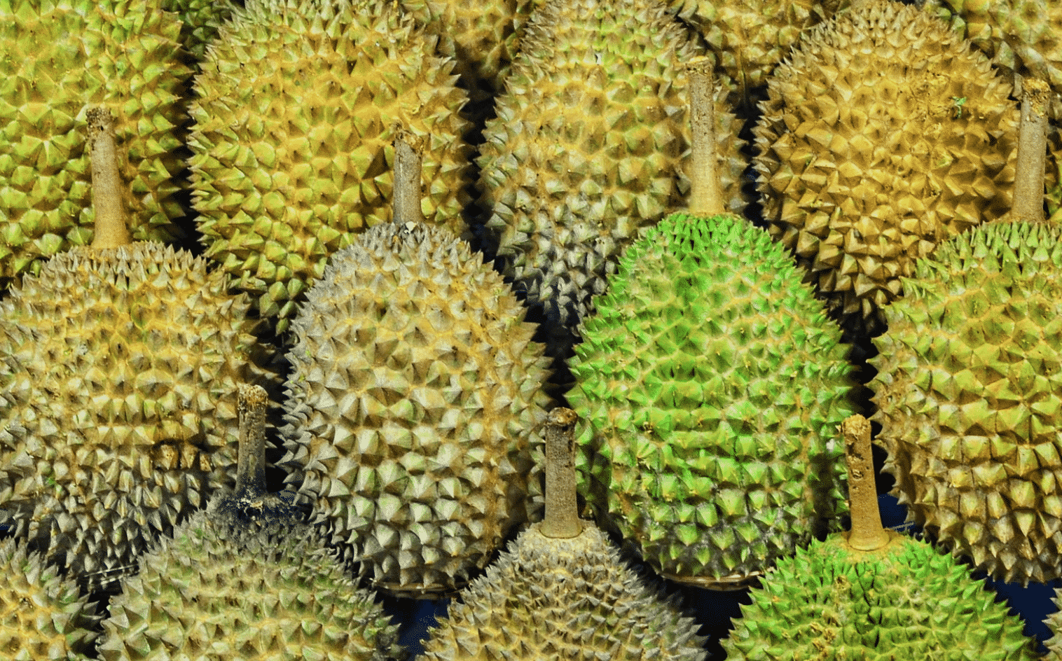 Should you eat Durian in Thailand