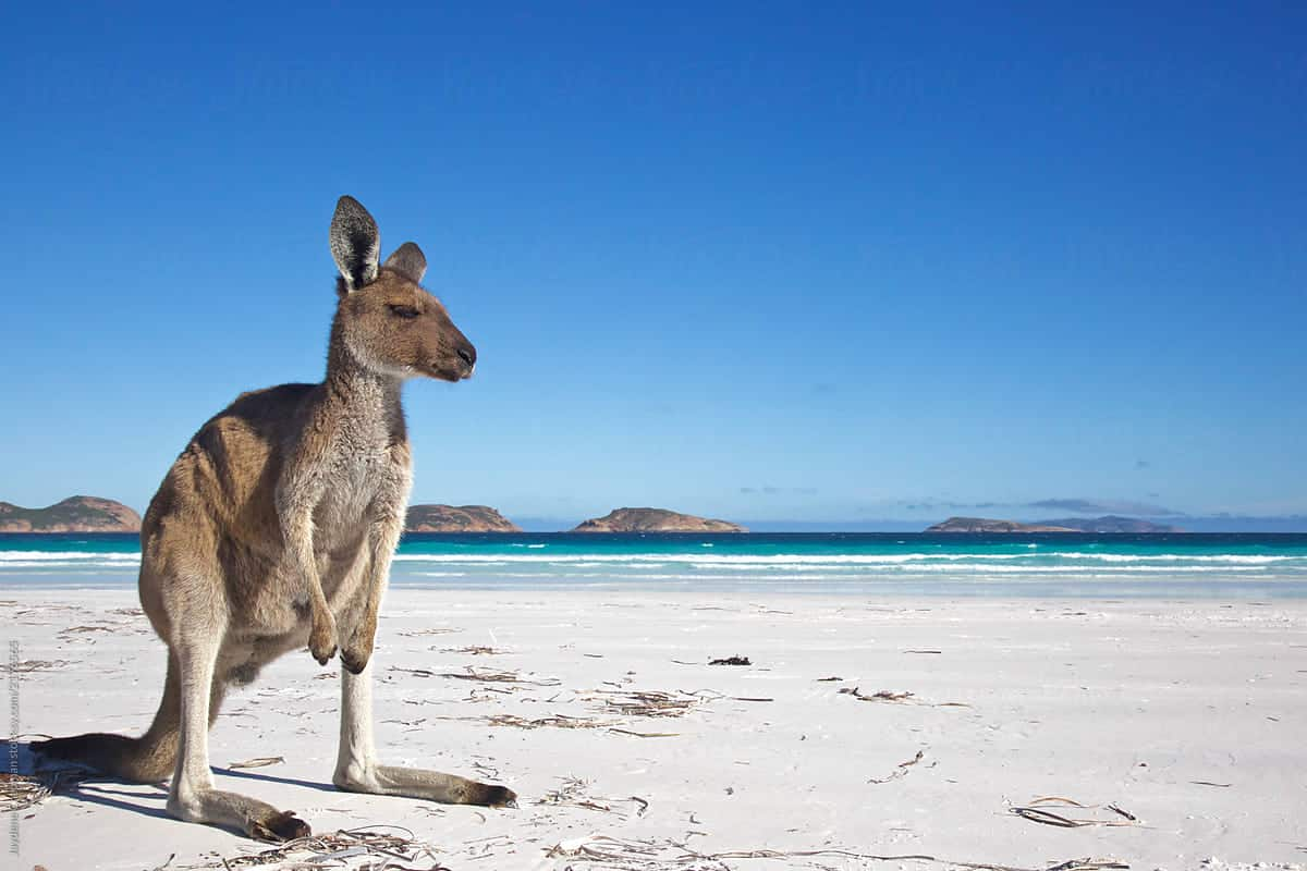 best beaches Australia