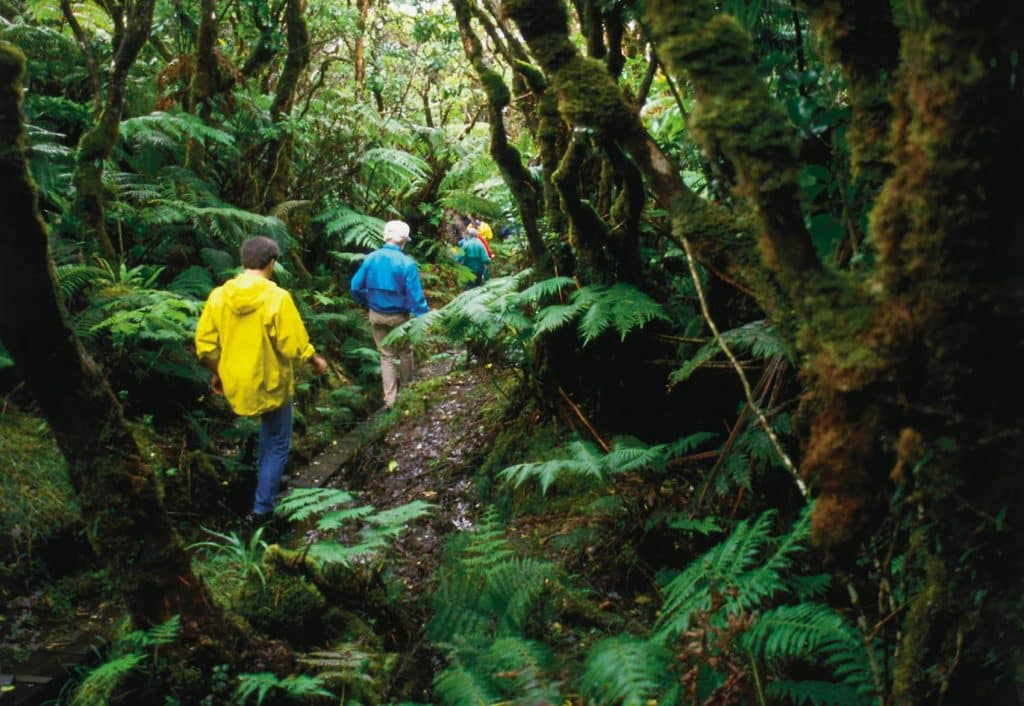 Eco-Tourism Experiences In Hawaii