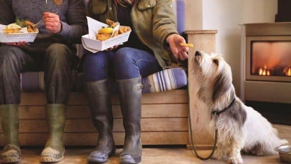Most Dog Friendly Restaurants in the UL