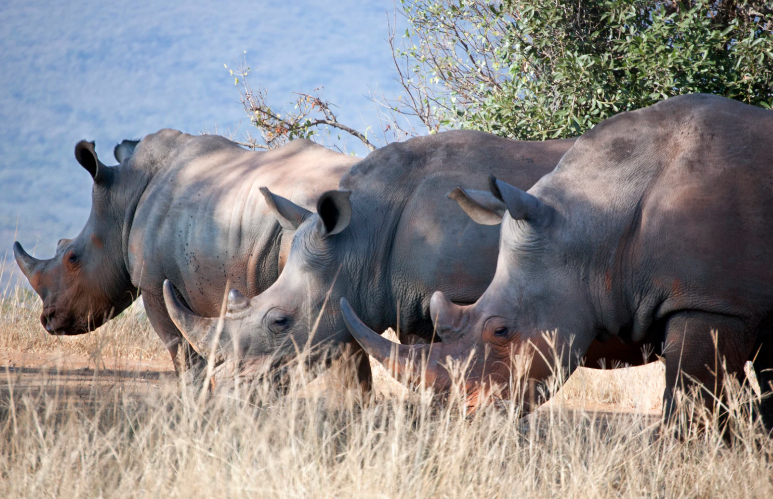 The best Safaris in South Africa