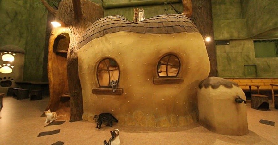 Cutest Cat Cafes in Tokyo