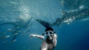 scuba diving sites Philippines