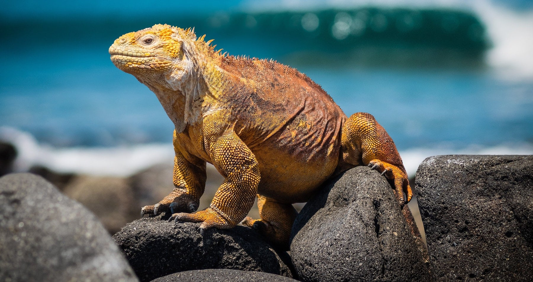 How to Visit the Galapagos Islands in 2020