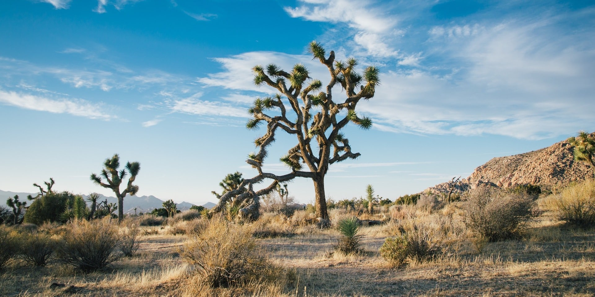 How to Visit Joshua Tree in 2020