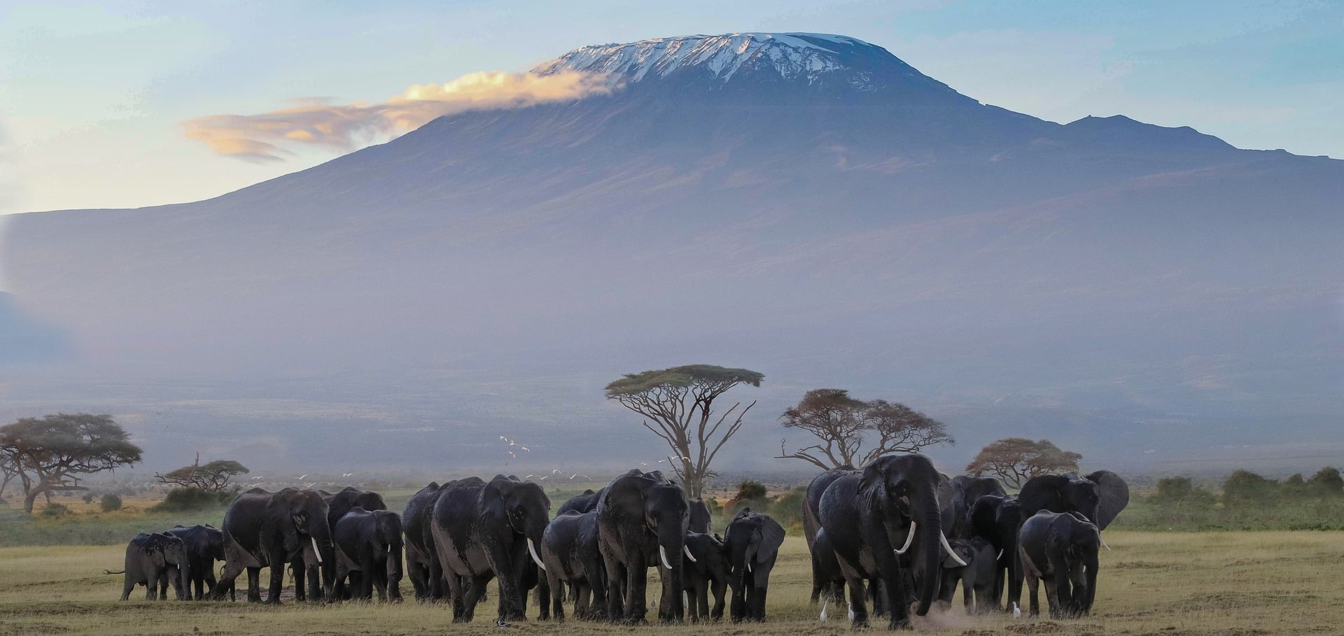 When to Visit Mount Kilimanjaro to See Snow