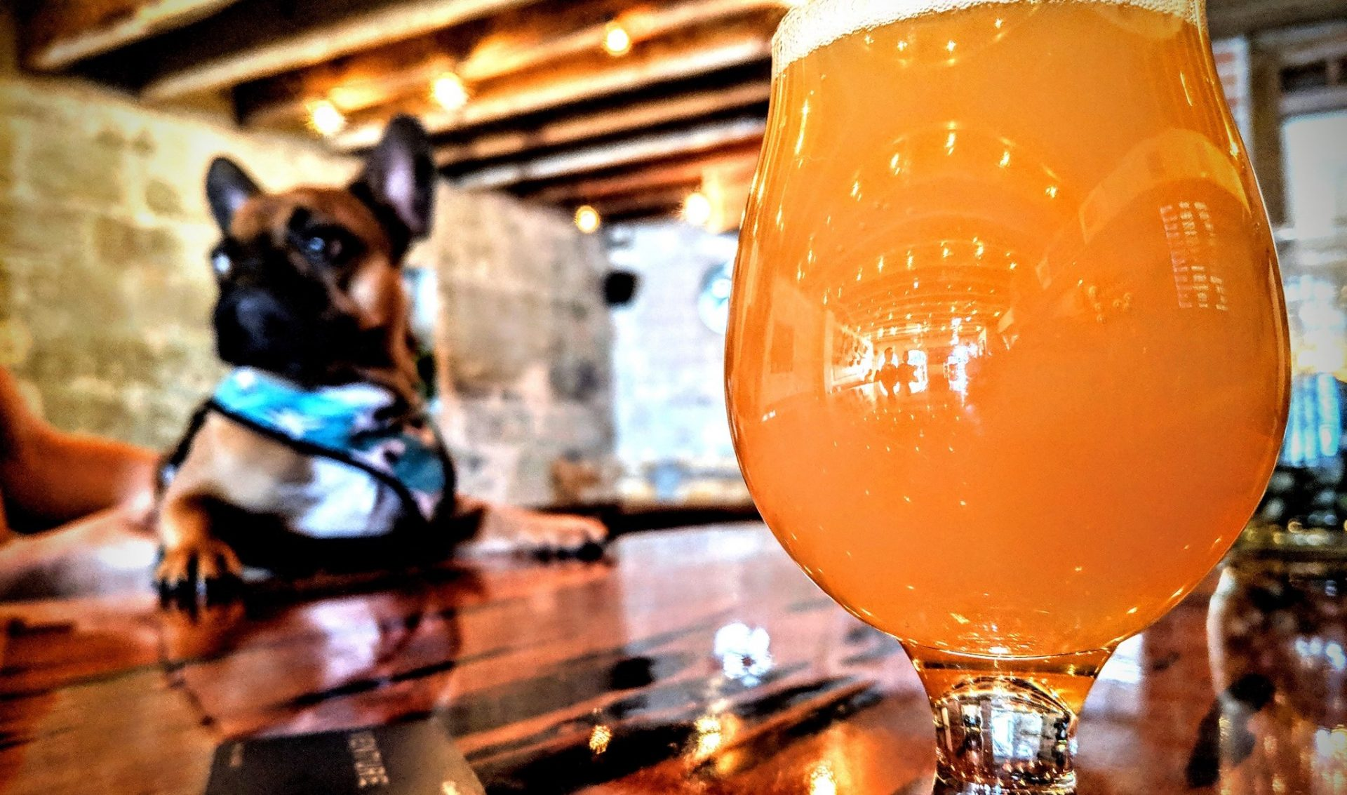 Best Craft Beer Bars In Orlando