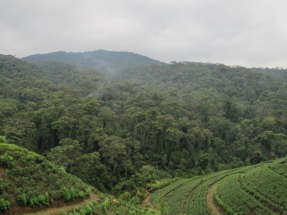 facts amazon rainforest