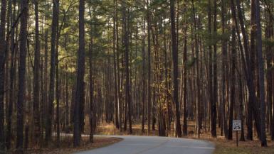 South Carolina Road Trips