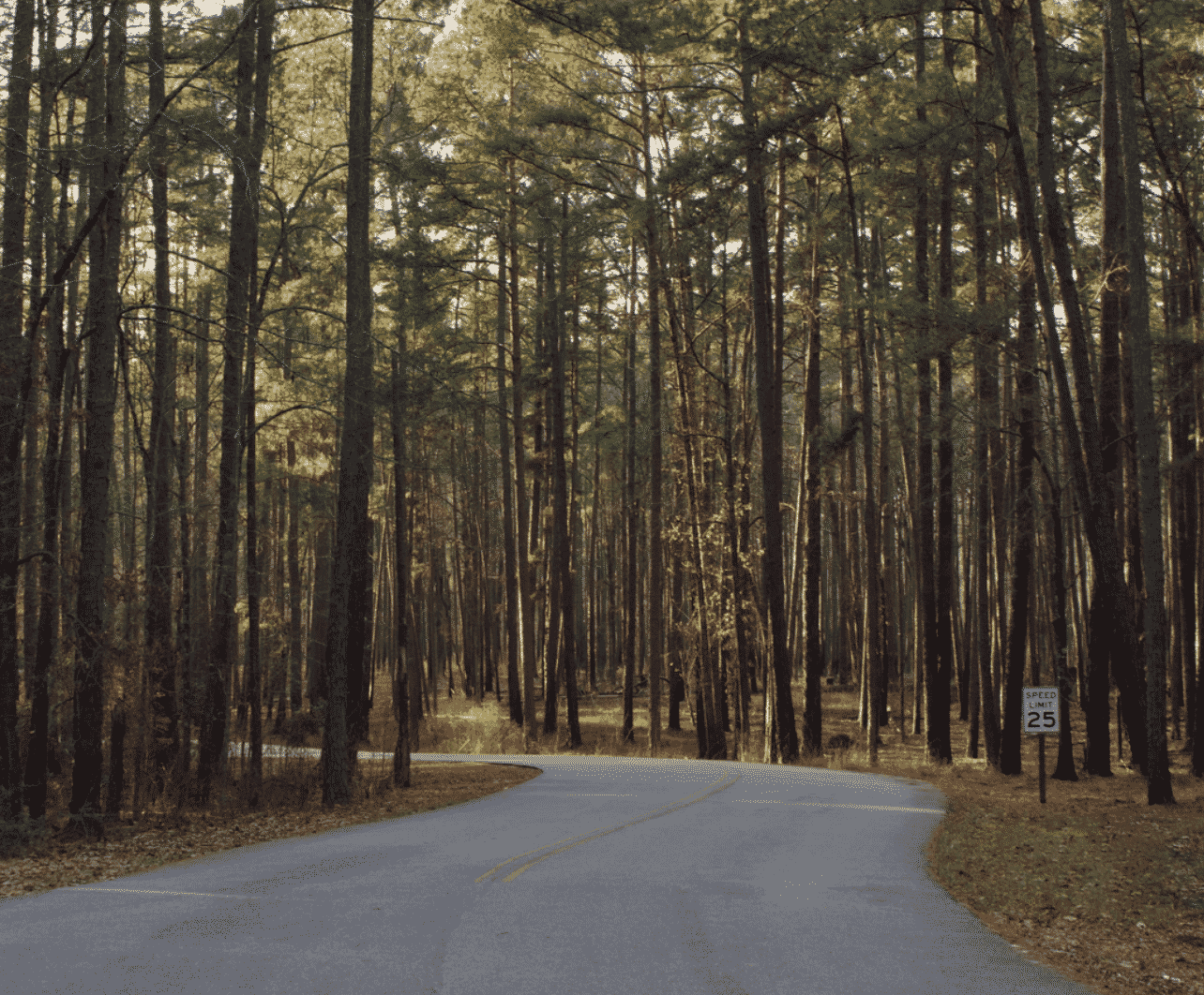 South Carolina Road Trips