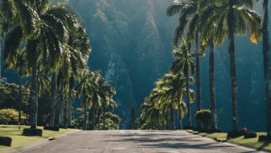 Hawaii Road Trips