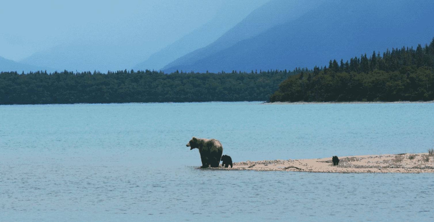 Alaskan Slang
