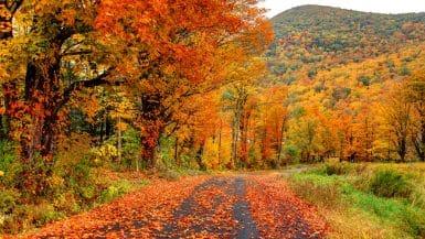fall foliage drives New England