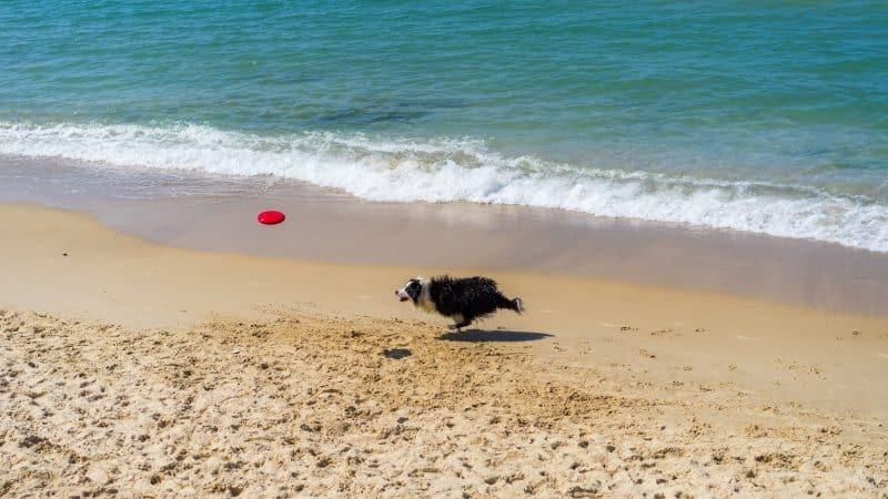 dog friendly beaches California