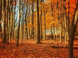 fall foliage 2020