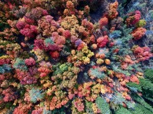 Utah fall foliage aerial trees
