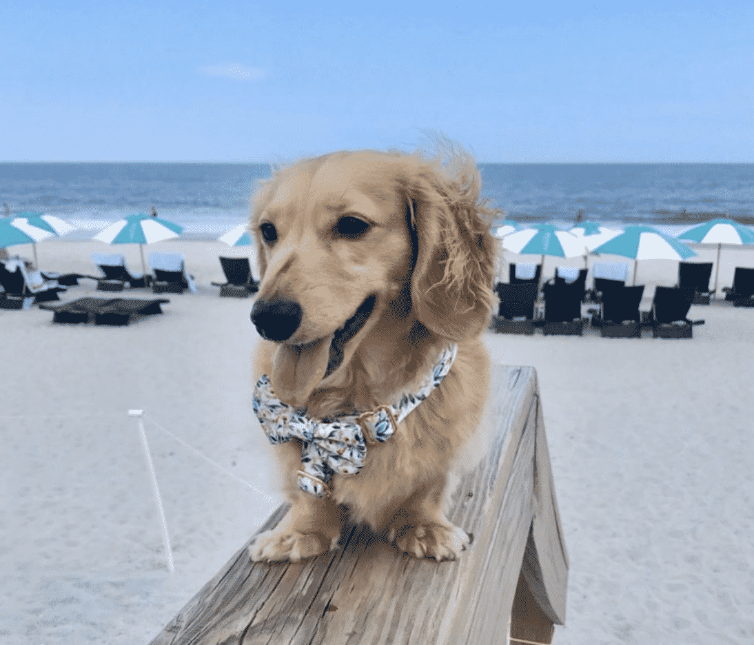 The 7 Best Pet Friendly Hotels In Florida