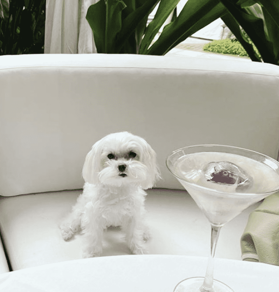Pet Friendly Hotels In Florida