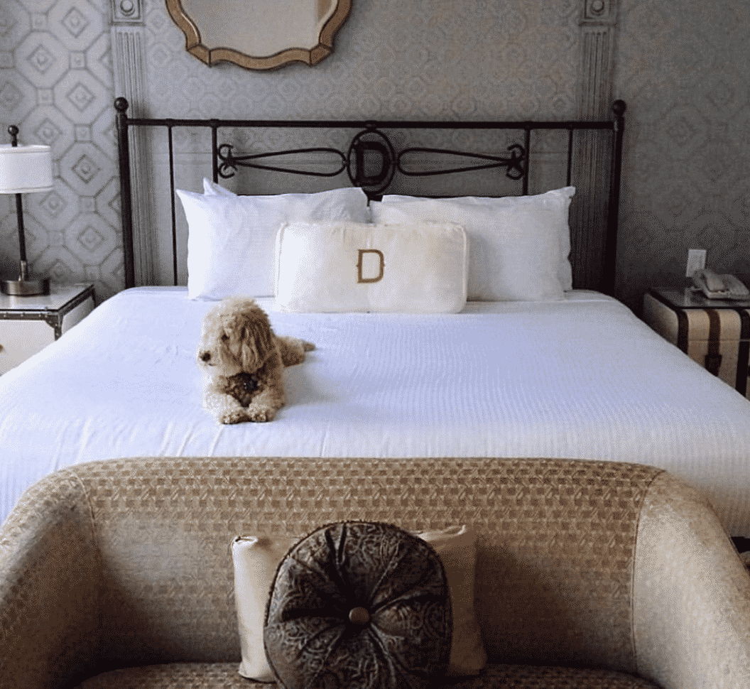 The 7 Best Pet Friendly Hotels In Texas