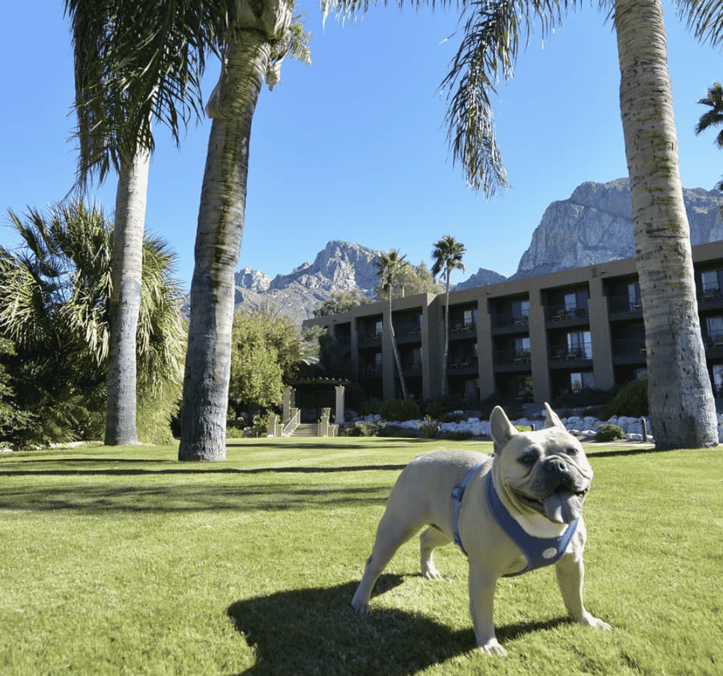 Pet Friendly Hotels In Arizona
