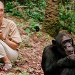 jane goodall wildlife tourism