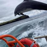 Fungie missing Dingle dolphin