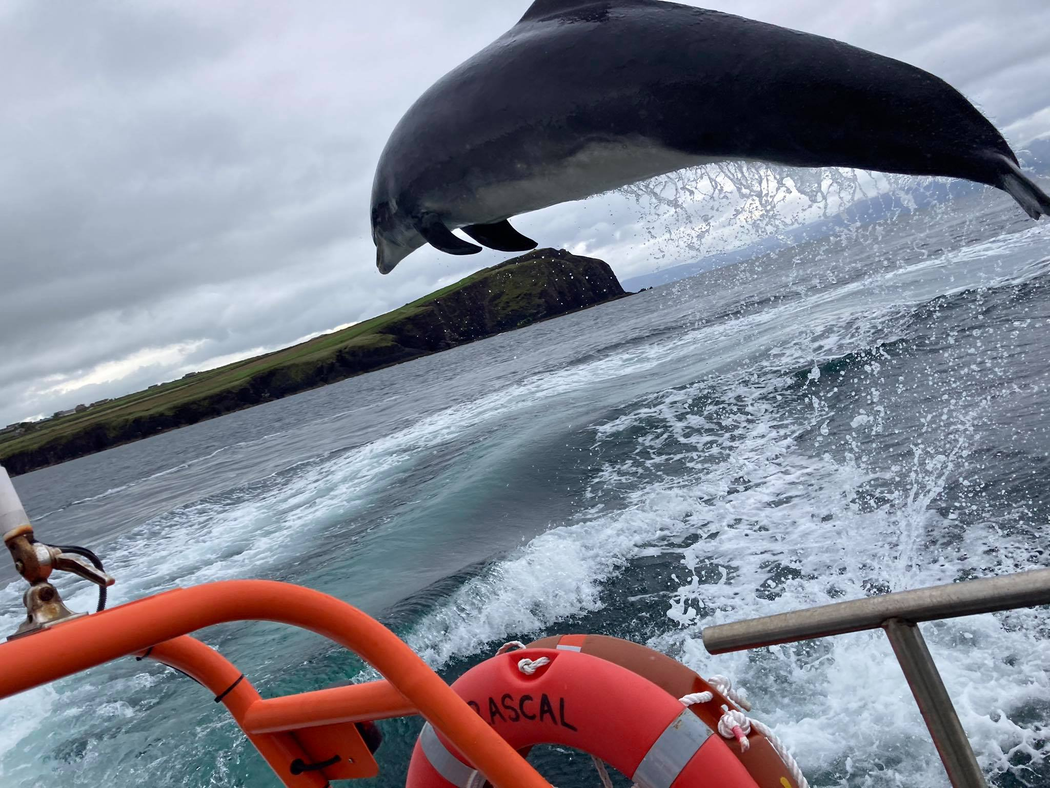 World-Famous Irish Dolphin Still Missing from Local Harbour travel