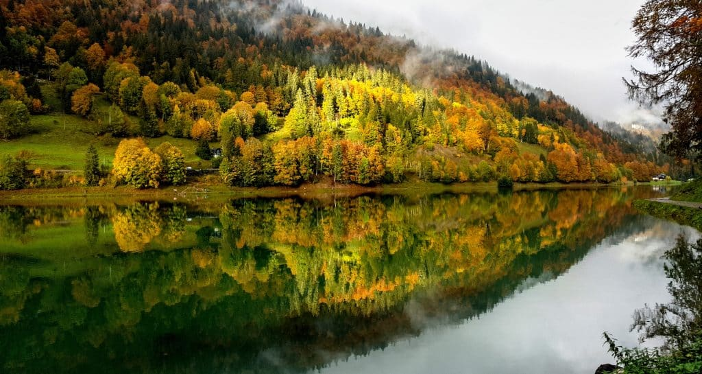 Green trees reflected in the water of Lac Montriond in France