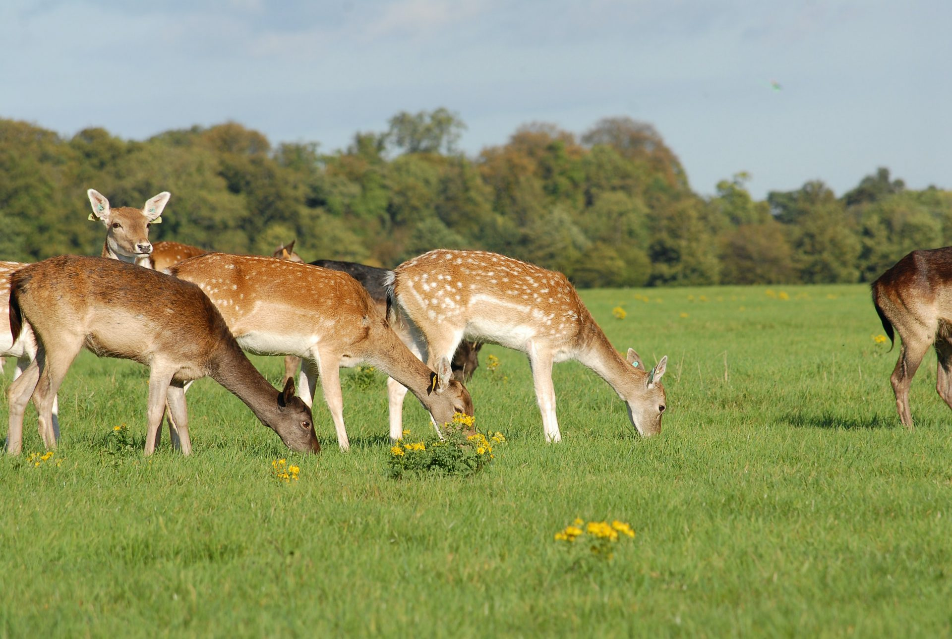 The 7 Best Things to do in Dublin with Kids Phoenix Park