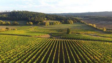 best wineries Oregon